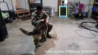 Retired military dog reunited with handler after five years