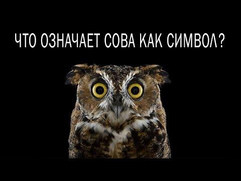 Что означает сова как символ