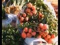 В Феодосии пройдут традиционные сельскохозяйственные ярмарки