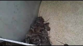 Прикол кот и мыши