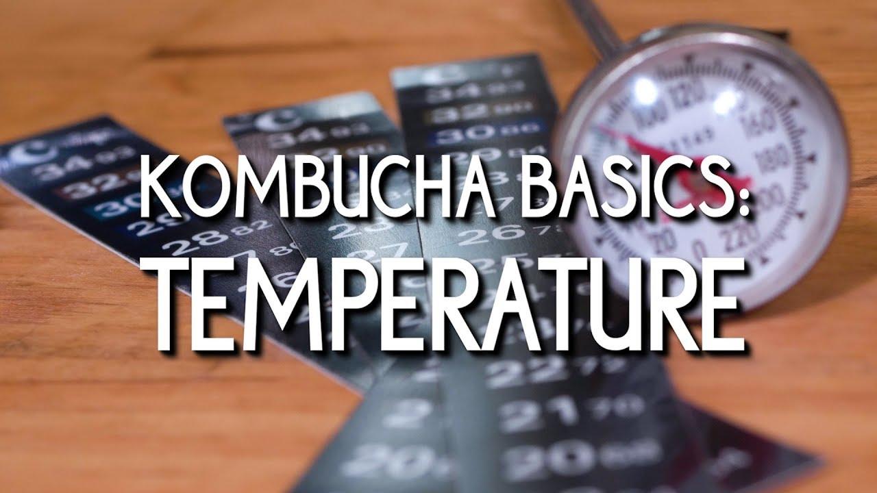 Kombucha Basics: Temperature