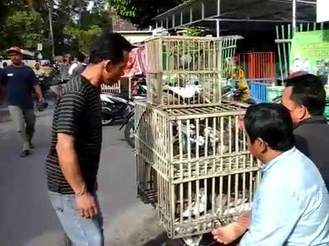 Jual Beli Burung Merpati Pasar Godean Sleman Youtube