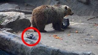 7 Momentos Con Animales Que Si No Hubieran Grabado Nadie Los Creeria