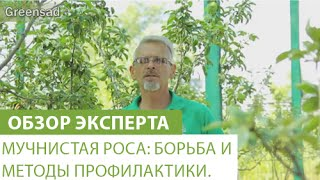 видео ВИНОГРАД.МИЛДЬЮ (ЛОЖНАЯ МУЧНИСТАЯ РОСА)
