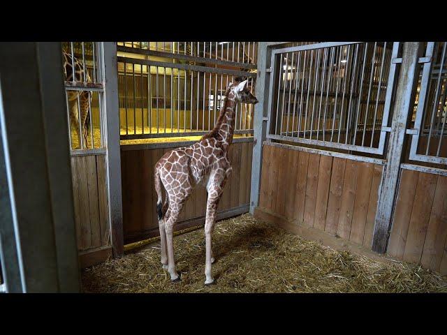 Une naissance exceptionnelle au Zoo d'Amnéville
