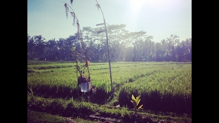 My Bali Trip
