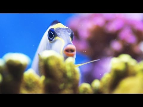 Stop a Fish from Chasing Its Tank Mates | Aquarium Care