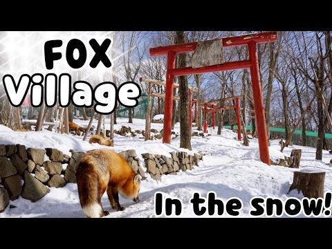 FOX! VILLAGE! red foxes, white snow, happy Sam || Sam in Tokyo