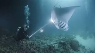 Night dive with Manta rays to the Maldives, Ari Atoll. 2020 January. Team OCEANSPIRIT
