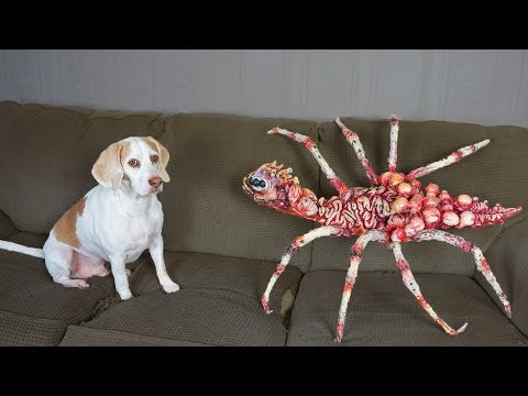 Dog vs Giant Spider Prank! Funny Dogs Maymo & Potpie