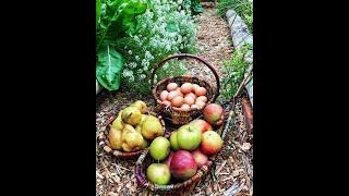 Hatchet & Seed - Edible Landscapes - Victoria, BC