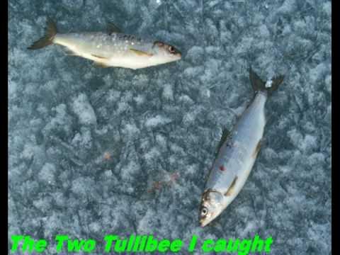 Fishing through lake ice for tullibee fish youtube for Lake gregory fishing report