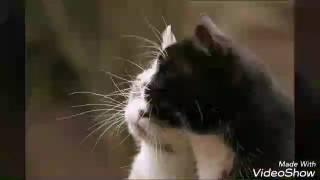 Ах, эта прекрасная кошачья жизнь