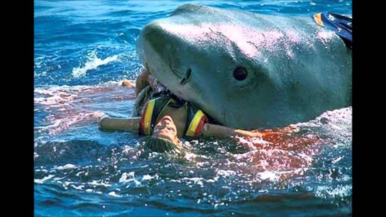 Attaque d 39 un grand requin blanc youtube - Dessin de grand requin blanc ...
