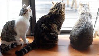 お庭を満喫するねこ。-Cats enjoy the garden.-