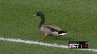 MLB Animals on the Field