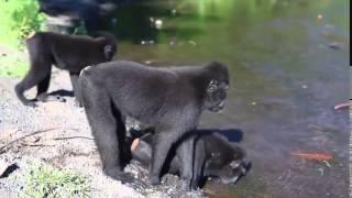 Смотреть приколы бесплатно Самые смешные спаривания животных  Funniest Animals