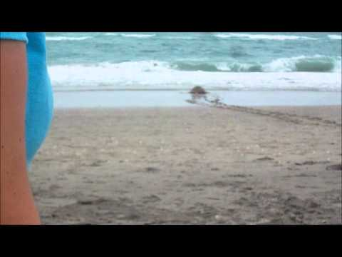 Sea Turtle Rescue Release From Loggerhead in W. Palm Beach Florida