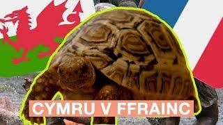 MERRY Y CRWBAN - CYMRU v FFRAINC