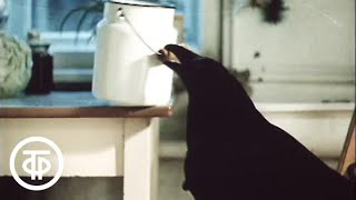В объективе - животные. Говорящий ворон Леша (1987)