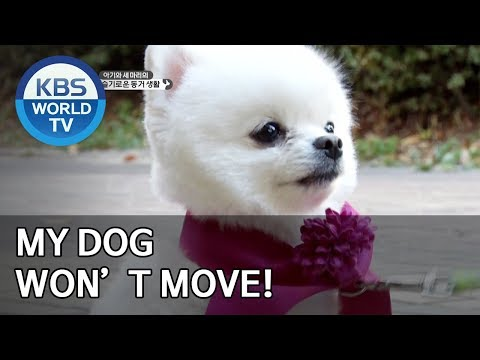 My dog won't move! [Dogs are incredible/ENG/2020.01.21]