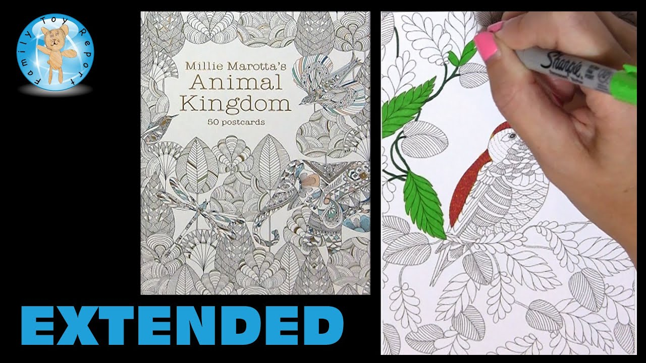Coloring book animal kingdom - Millie Marotta S Animal Kingdom Postcards Adult Coloring Book Hummingbird Extended Family Toy Report Youtube