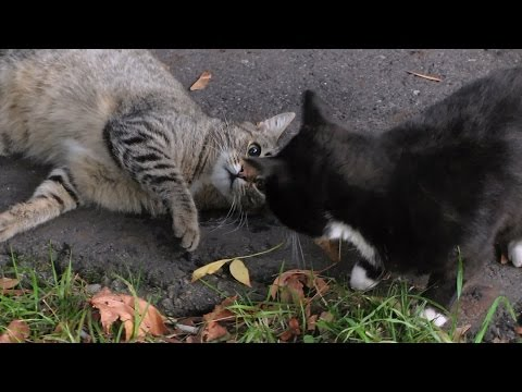 Tabby cat vs. Black cat