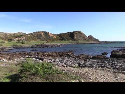Discover Whitireia Park