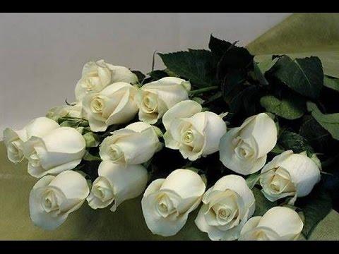 С днём рождения картинки белые розы