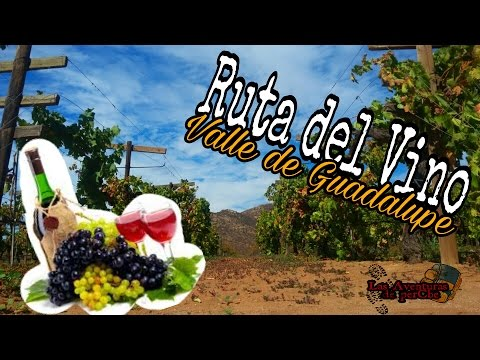 ruta del vino/valle de guadalupe