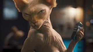 Приколы с кошками  Кошки против всех