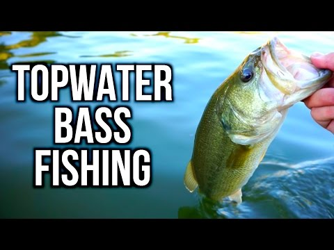 Summer Topwater Bass Fishing