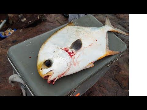 SURF FISHING | BIG PERMIT | SRI LANKA FISHING
