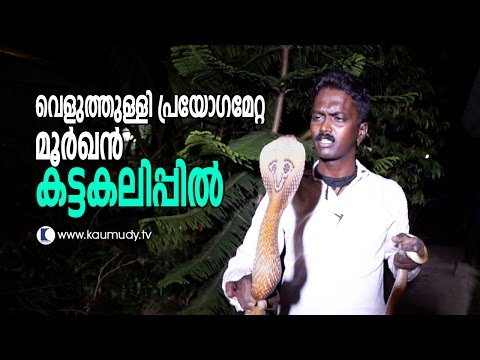 Wow ! Vava Suresh Catching Violent Cobra | Snake Master