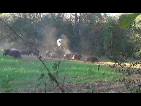 Shotgun Hog Hunt with Kick's Buckkicker Full