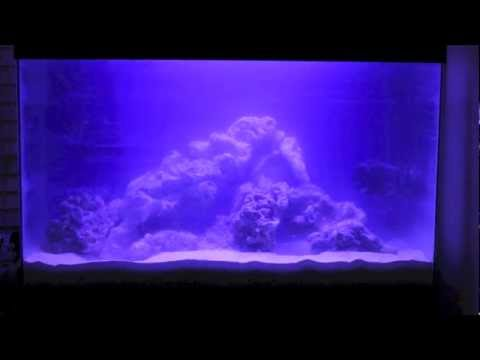 Why Do Freshwater Aquariums Become Cloudy | How To Save Money And Do