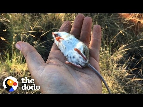 "Watch This Guy Bring A ""Dead"" Mouse Back To Life 
