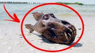 5 SERES EXTRAÑOS Que Habitan El OCEANO PROFUNDO