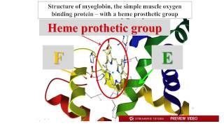 Biochemistry   Hemoglobin, Myoglobin tutorial