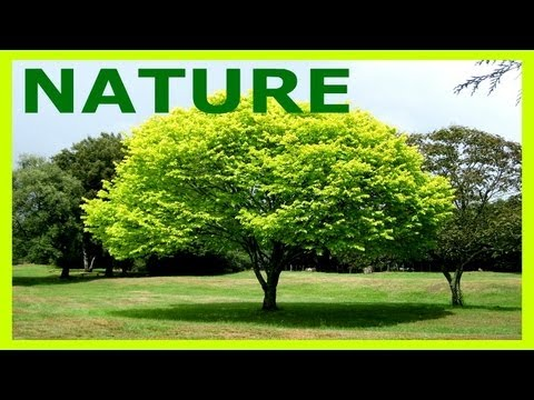 essay on nature in simple english