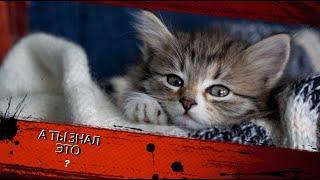 Интересные факты про кошек Interesting facts about cats