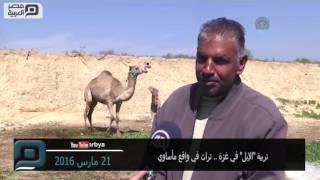 مصر العربية | تربية