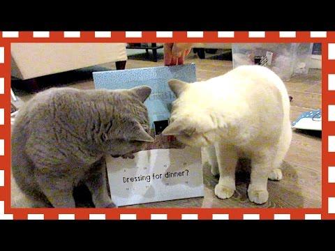 CAT ADVENT CALENDARS!   VLOGMAS DAY 1