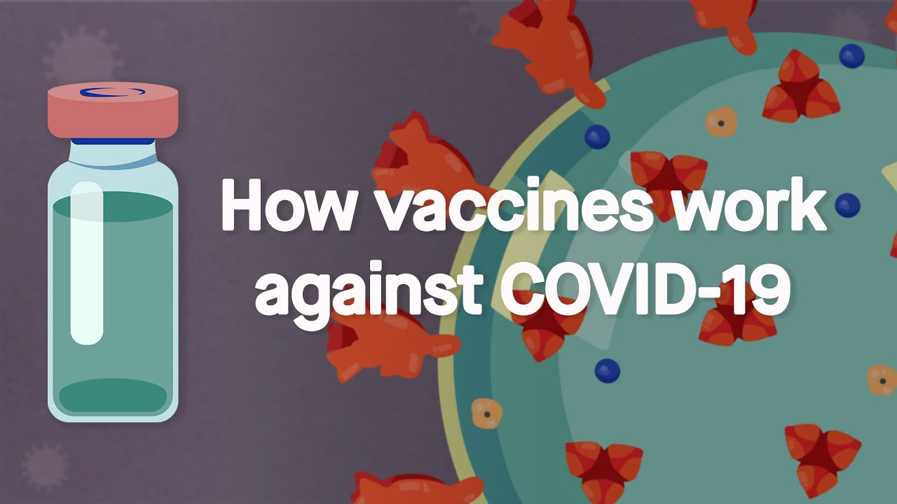 How vaccines work against COVID-19: Science, Simplified