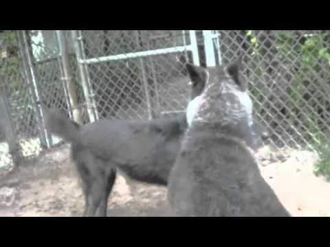 Yuki, my wolf friend at Shy Wolf Sanctuary