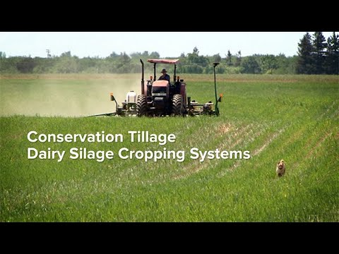 Conservation Tillage Dairy Silage Cropping Systems