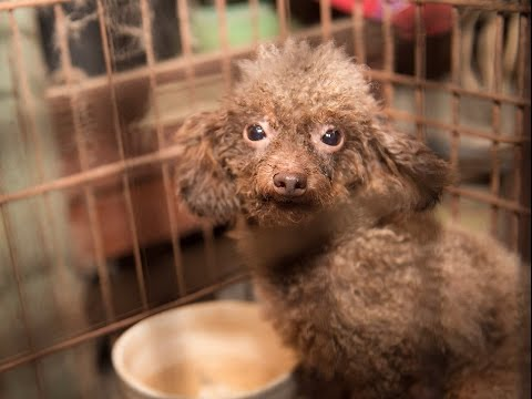 140+ animals rescued from North Carolina puppy mill