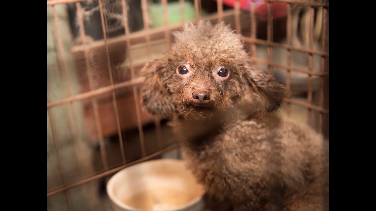 140 Animals Rescued From North Carolina Puppy Mill Youtube