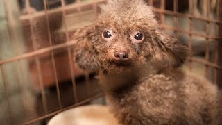 140 animals rescued from north carolina puppy mill
