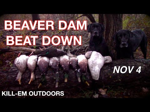 Beaver Dam Beat Down (NY Duck Hunt)